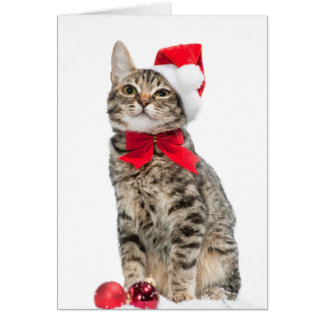 Christmas cat - santa claus cat - cute kitten card