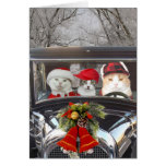 Christmas Cats in Car