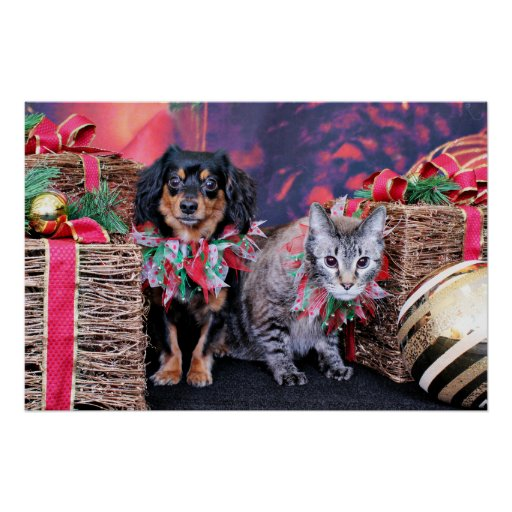 Christmas - Chiweenie - Titus - Kitty Poster