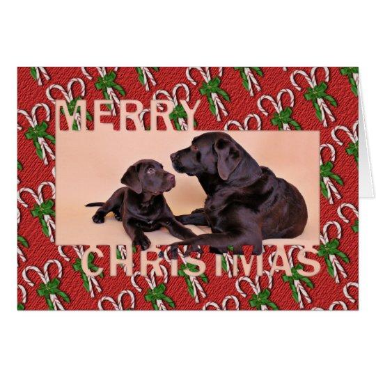 Christmas - Chocolate Labradors Card