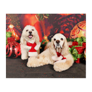 Christmas - Cocker - Toby, Havanese - Little T Acrylic Print
