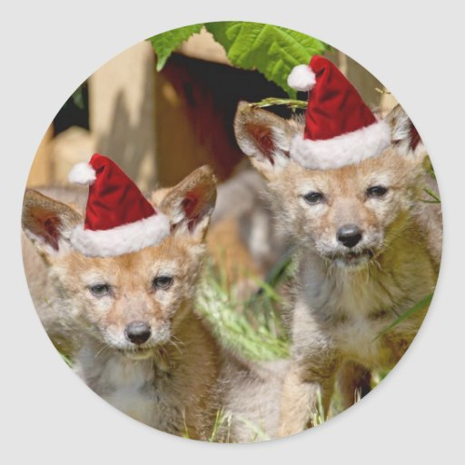 Christmas Coyote Pups Stickers
