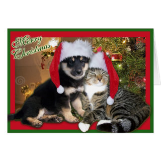 Christmas Dog & Cat Card