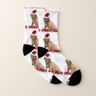 Christmas Dogue de Bordeaux  puppy dog socks 1