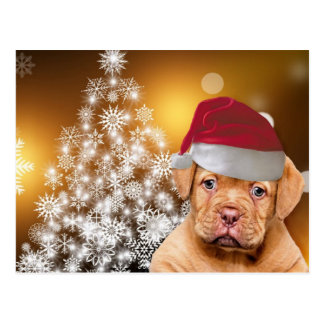 Christmas Dogue de Bordeaux puppy postcard