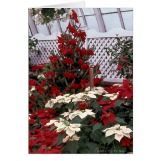 'Christmas Floral' blank Greeting Card