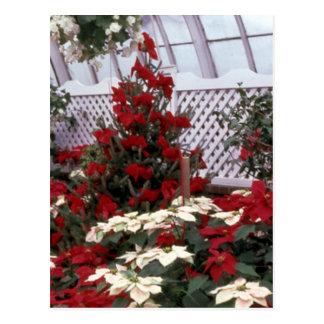 Christmas Floral postcard 2