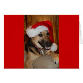 Christmas German Shepherd Card