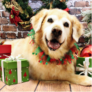 Christmas - Golden Retriever - Abby Photo Sculptures