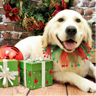 Christmas - Golden Retriever - Jilly Photo Cut Outs