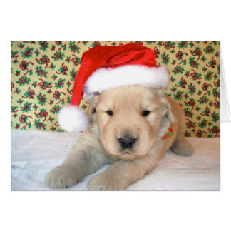 Christmas Golden Retriever Puppy Card