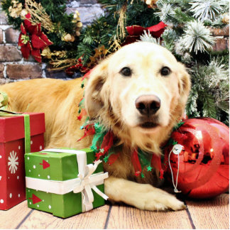 Christmas - Golden Retriever - Rascal Photo Cutout