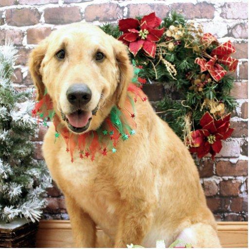 Christmas - Golden Retriever - Wriggley Photo Sculpture