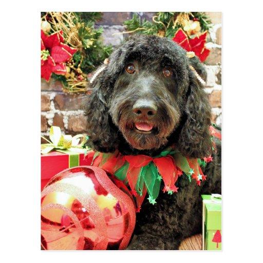 Christmas - GoldenDoodle - Pearl Jam Postcards