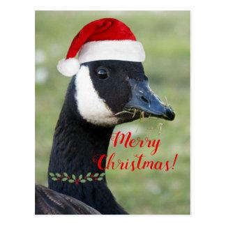 Christmas Goose Photo Holiday Postcard