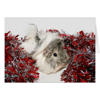 Christmas Guinea Pig Card