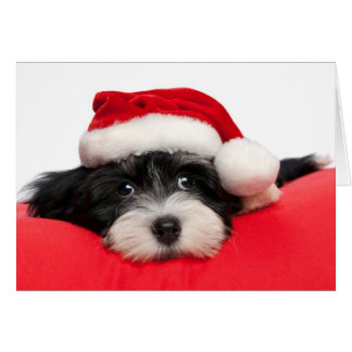 Christmas Havanese Puppy Dog Card