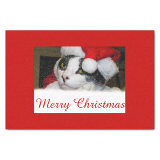 Christmas /Holiday Cat in X-Mas Hat Tissue Paper