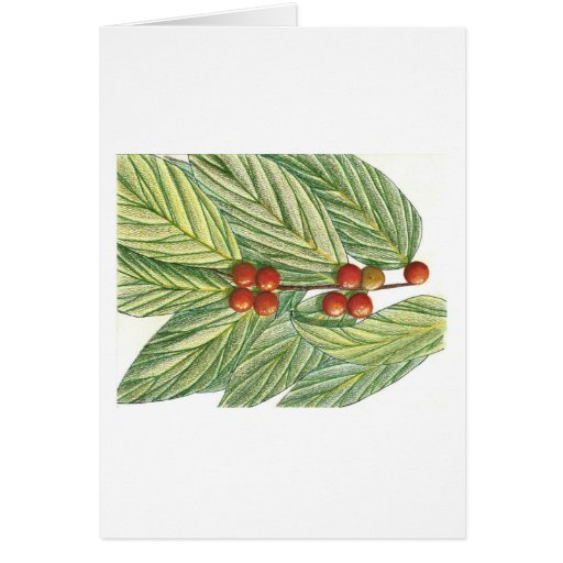 Christmas Holly and Berries Cards