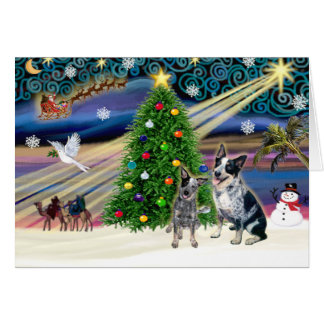 Christmas Magic Australian Cattle Dogs two Cards