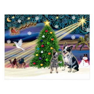 Christmas Magic Australian Cattle Dogs (two) Postcard
