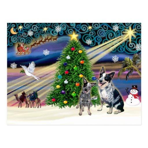 Christmas Magic Australian Cattle Dogs (two) Postcard