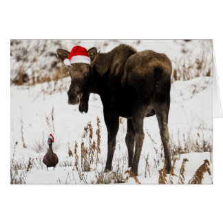 Christmas moose with duck holiday card. card