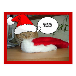 Christmas Orange Tabby Cat Post Cards