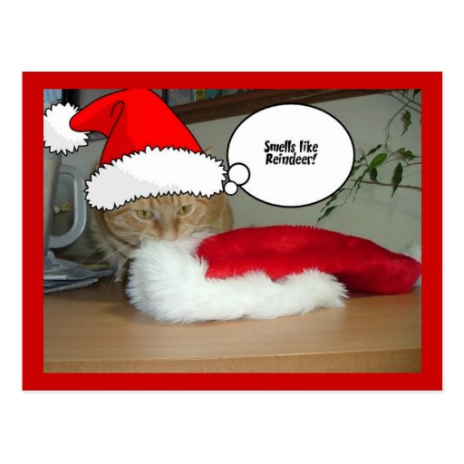 Christmas Orange Tabby Cat Post Cards