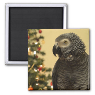 Christmas Parrot Magnet