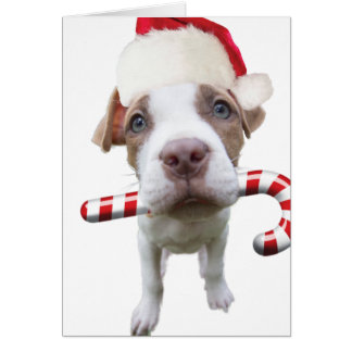 Christmas pitbull - santa pitbull -santa claus dog card
