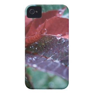 Christmas Poinsettia Case-Mate iPhone 4 Cases