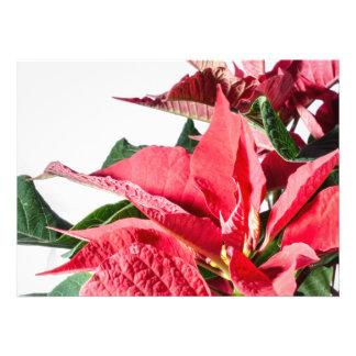 Christmas Poinsettia Personalized Invite