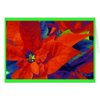 Christmas Poinsettias Card
