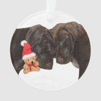Christmas Pointer Sister Puppies