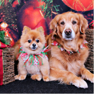 Christmas - Pom Puff - Golden Retriever Bear Acrylic Cut Outs
