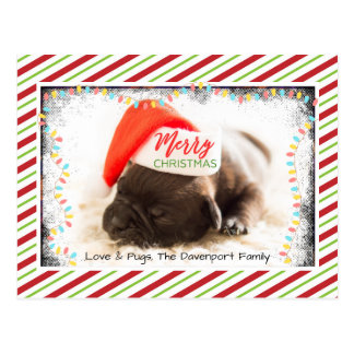 Christmas Pug in Santa Hat with Christmas Lights Postcard