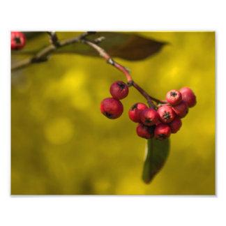 Christmas Red Berries Photo Art