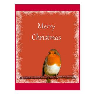 Christmas Robin Red Snowflakes Postcard