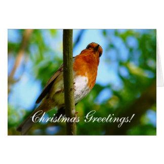CHRISTMAS ROBINS GREETING CARD