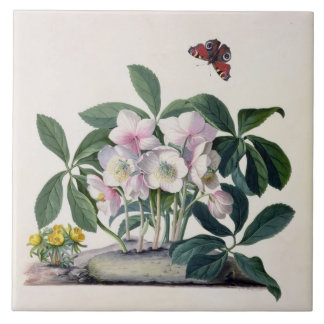 Christmas Rose (Helleborus niger) and Winter Aconi Ceramic Tile