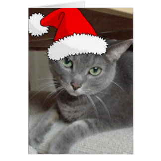 Christmas Russian Blue Gray Cat Card