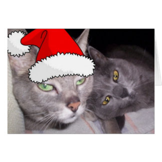 Christmas Russian Blue Gray Cats Card