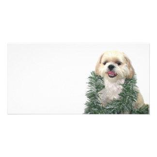 Christmas Shih Tzu Photo Greeting Card