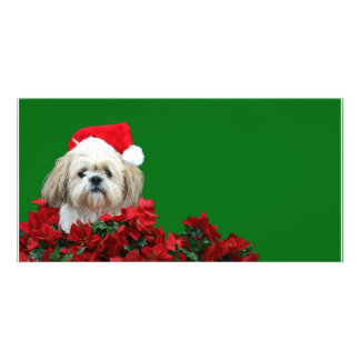 Christmas Shih Tzu Picture Card
