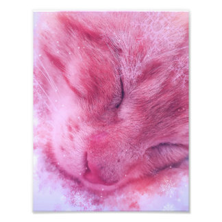Christmas Snowflake Sleepy Cat Art Photo