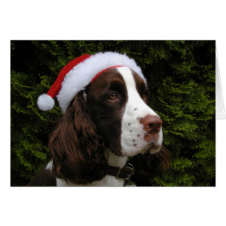 Christmas Springer Spaniel Christmas Card