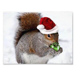 Christmas Squirrel Photographic Print