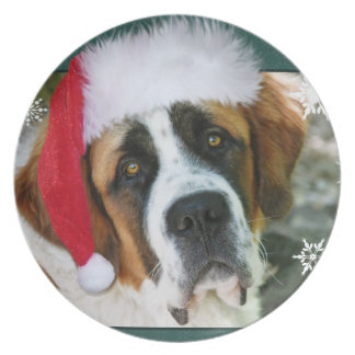 Christmas St. Bernard Dog Photo Party Plates