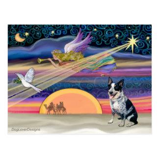 Christmas Star - Australian Cattle Dog Postcard